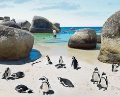 Visitors enjoy the company of African Penguins at Boulders Beach in Simonstown.