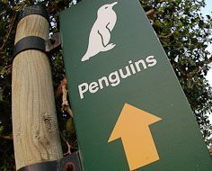 A sign indicating the way to the Boulders Beach Penguin Colony, on a suburbian Simonstown beach.
