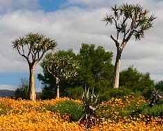 A scene in the Ramskop Wildflower Garden In Clanwilliam.