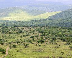 Landscape in the Hluhluwe-Umfolozi Game Reserve in South Africa's KwaZulu-Natal province.