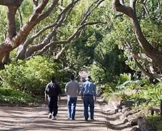 Visitors strolling in a section of the Kirstenbosch National Botanical Gardens in Cape Town.