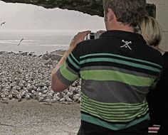 Visitors observe some of the thousands of Cape Gannets that congregate at Bird Island - Lamberts Bay.