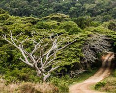 A gravel road meanders through the coastal forest at iSimangaliso Wetland Park, a UNESCO World Heritage Site.