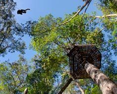 A tourist glides along a zip-line through the Tsitsikamma forest canopy.