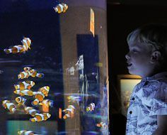 Boy at 'Finding Nemo' (clown fish) tank at the Two Oceans Aquarium in Cape Town.