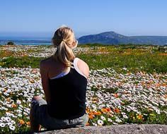 A visitor takes in the wildflower spectacle in the West Coast National Park, about an hour's drive from Cape Town. August is your safest bet to see the veld flower in the Park, elswhere on the West Coast or in Namaqualand.