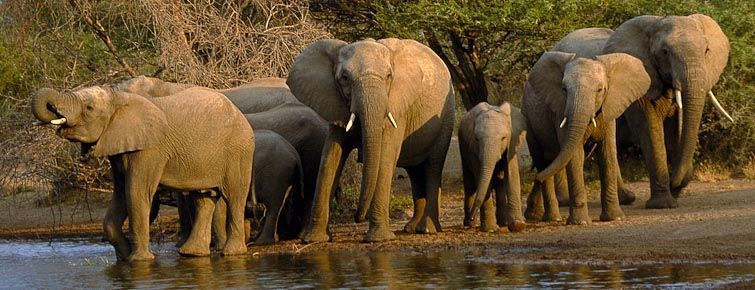Elephants at a Kruger National Park waterhole.